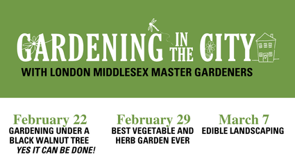 gardening in the city
