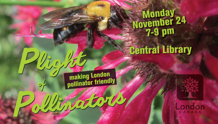 plight of pollinators